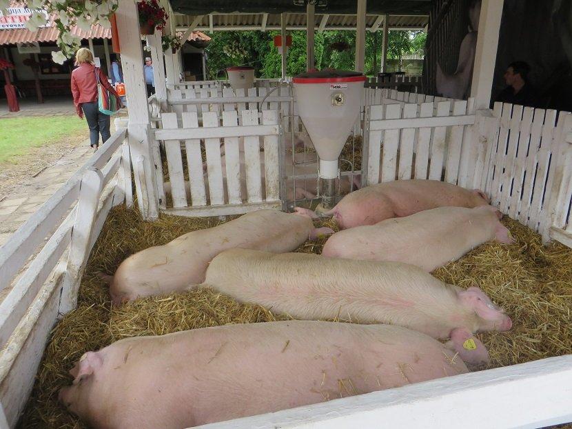 Ilustracija: sa sajma poljoprivrede u Novom Sadu