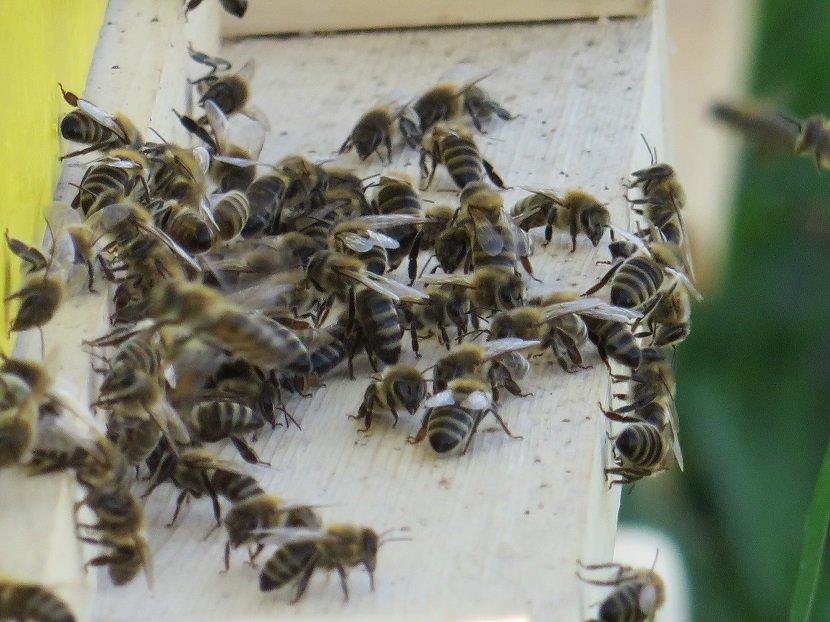 Ilustracija: pčelinjak, foto: Domačinska kuća