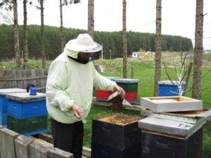Ilustracija: Murat u pčelinajku