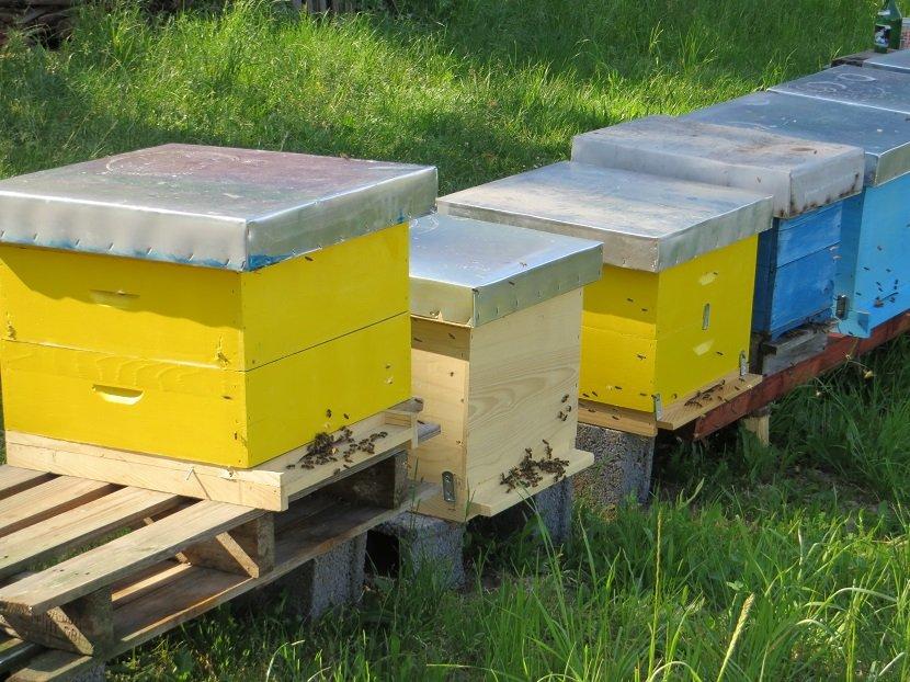Ilustracija: pčelinjak