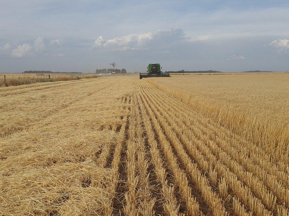 Ilustracija, polje, poljoprivreda, fotorafija preuzeta sa sajta pixabay.com / Augusto Bosch