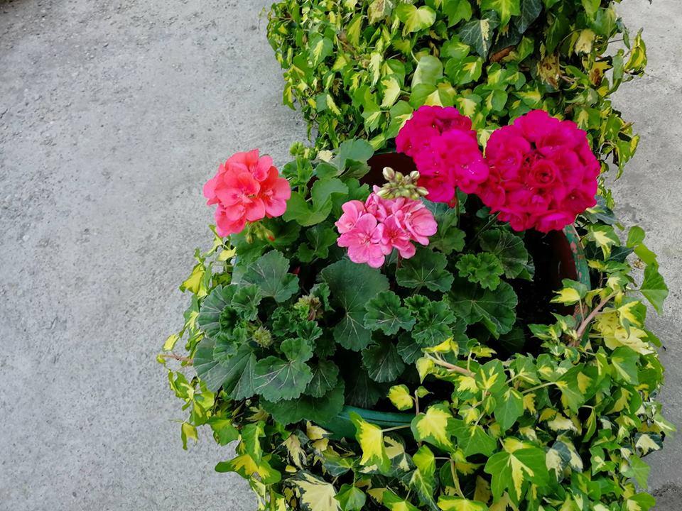 Ilustracija: prolećno cveće, foto: Domaćinska kuća