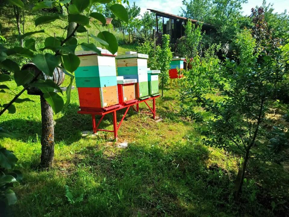 Ilustracija: pčelinjak Kneževića, foto: Domaćinska kuća