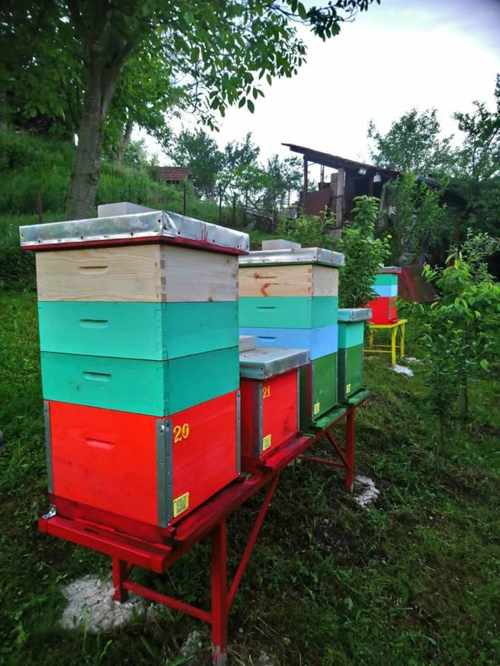 Ilustracija: pčelinjak u Rvatima, foto: Domaćinska kuća