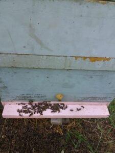 Ilustracija: trovanje pčela, foto: Tatjana Mrdak