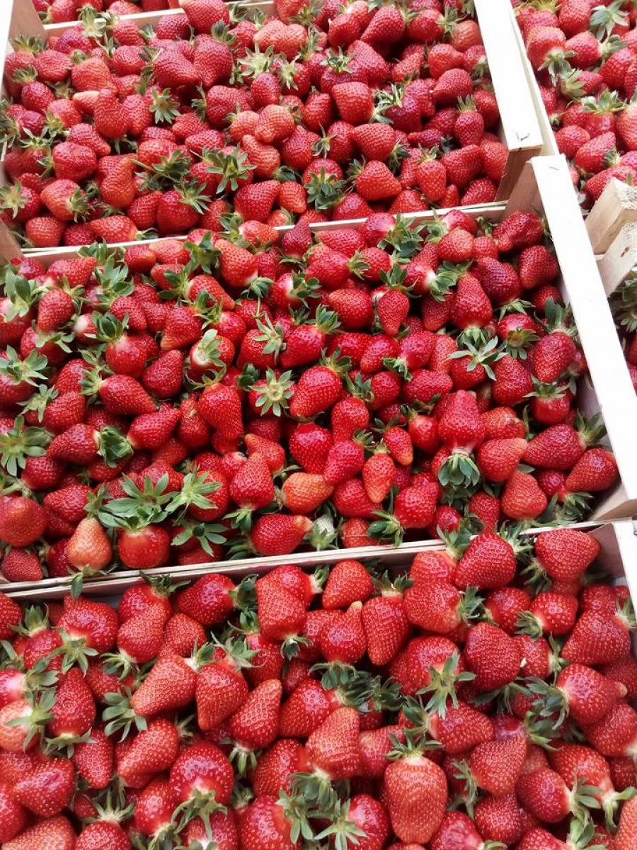 Ilustracija: jagode spremne za prodaju, foto: Domćinska kuća