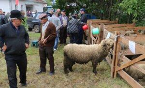 Ilustracija: svrljiška ovca, foto: http://www.svrljig.info/