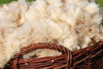 Ilustracija: merino vuna, foto: http://www.holtex.cz