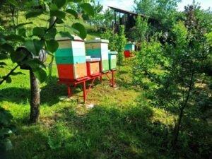 Ilustracija: pčelinjak gazdinstva Knežević