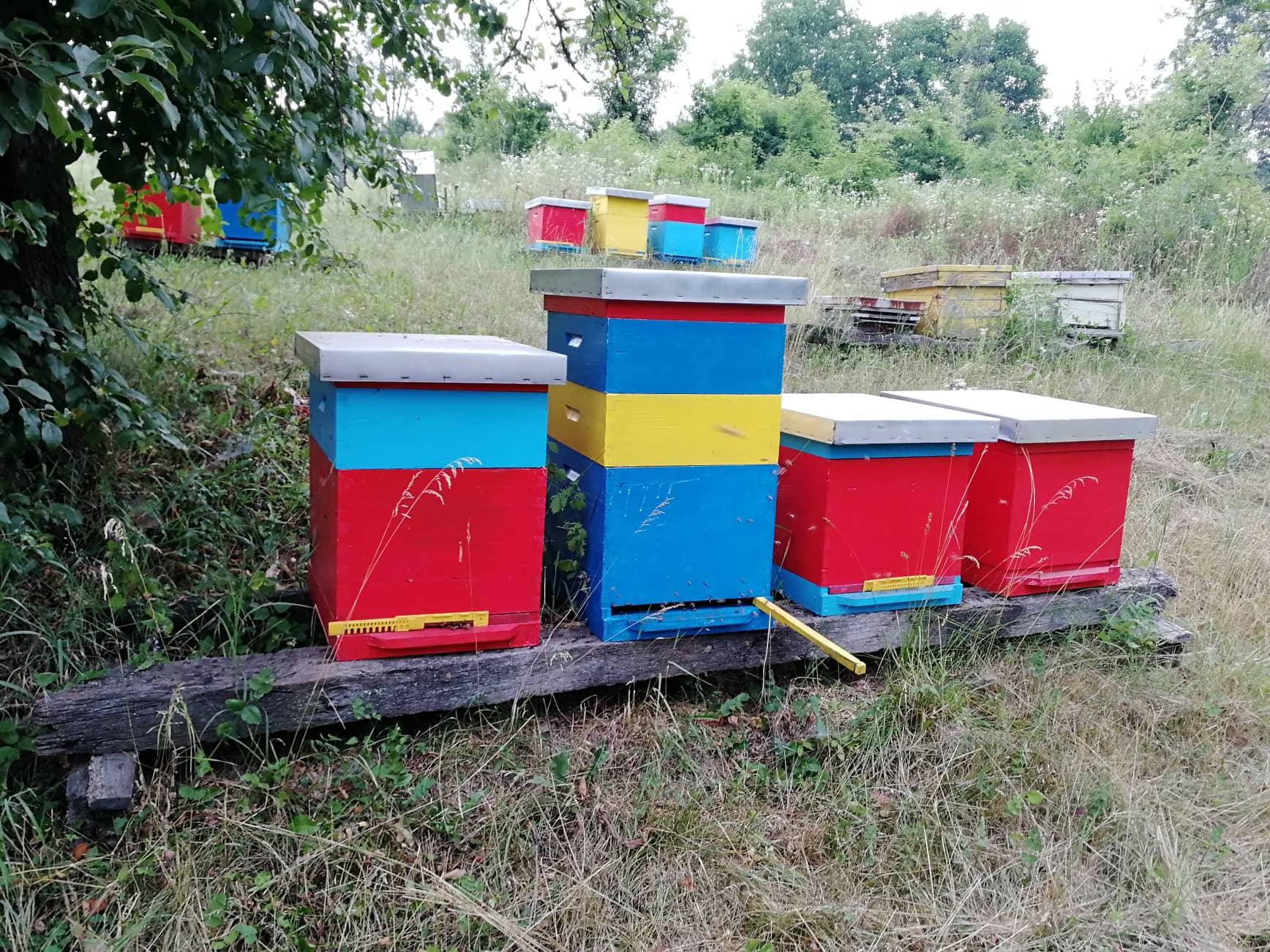 Ilustracija: Pčelinjak Vladana Milićevica, foto: Domaćinska kuća
