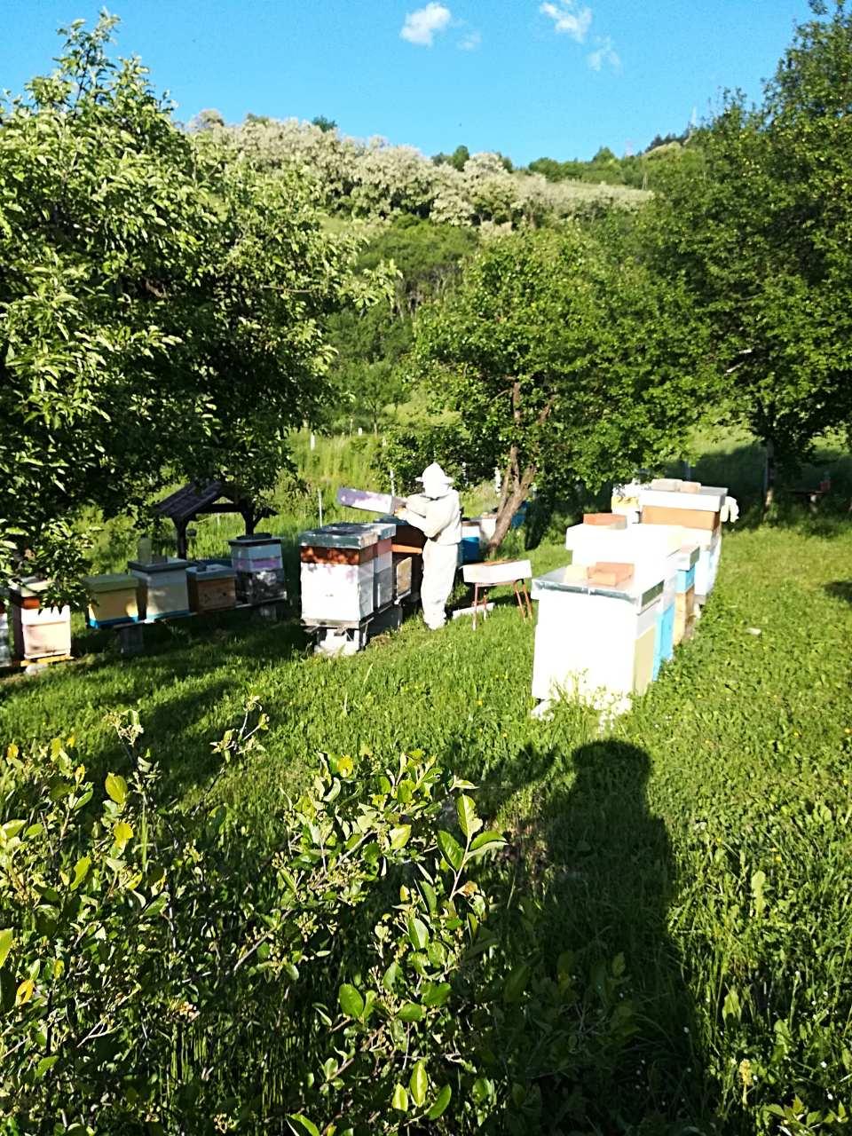 Ilustracija: Pčelinjak, foto: S.K.