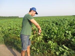 Ilustracija: Miloš Margan mladi strucnjak i poljoprivrednik