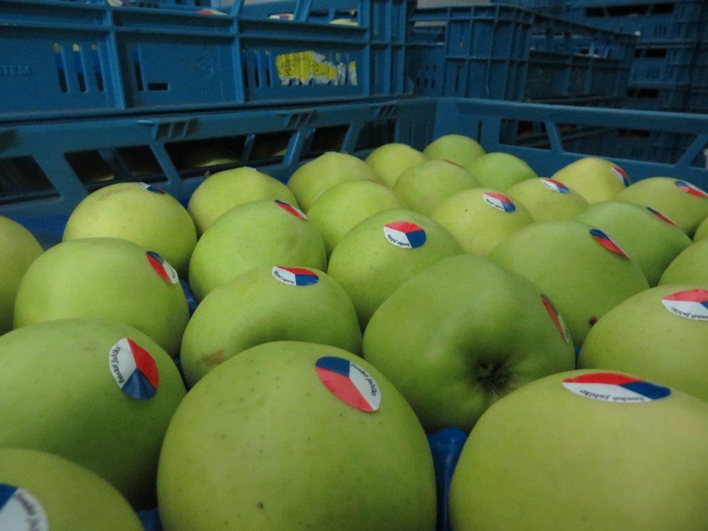 Ilustracija; jabuke, foto: Domaćinska kuća