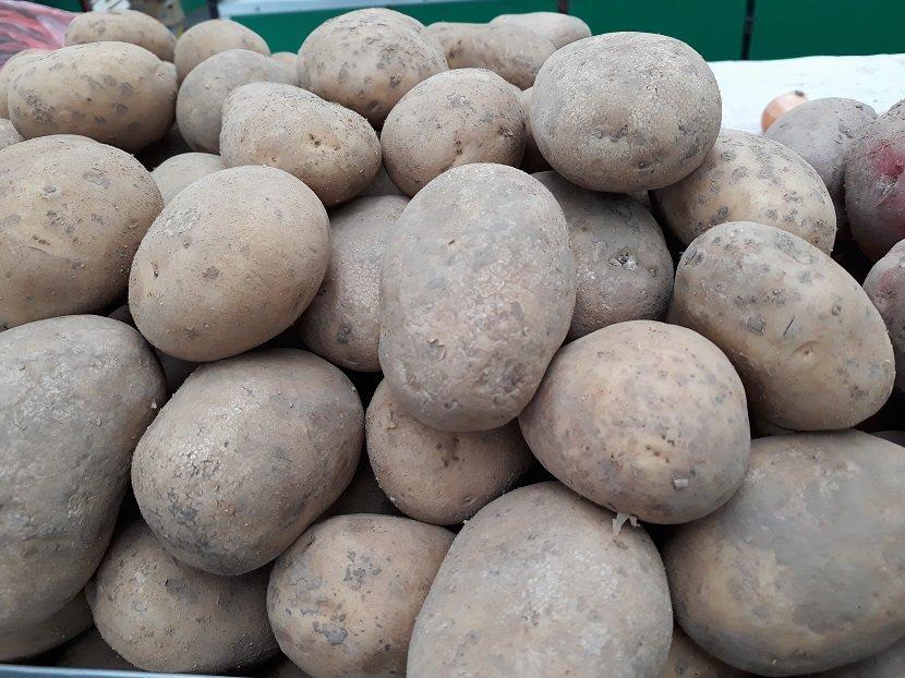 Ilustracija: krompir, foto: Domaćinska kuća