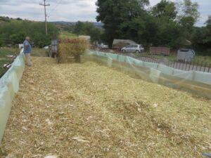 Ilustracija: kukuruzna silaža, foto: S.K.