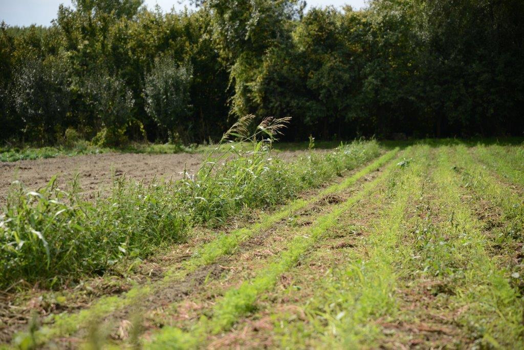 Ilustracija: organska poljoprivreda, foto: Domaćinska kuća