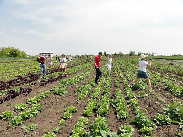 Ilustracija: Polje pod organskom proizvodnjom, foto: G.Đ.