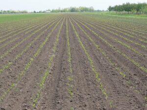 Ilustracija: organska poljoprivreda, foto: S,K.