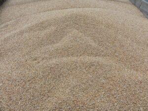 Ilustracija: pšenica, foto: S,K.