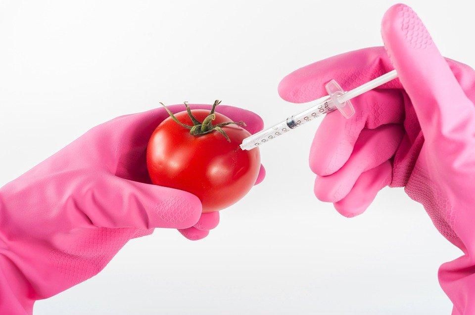 Ilustracija: gmo hrana, foto: pixabay