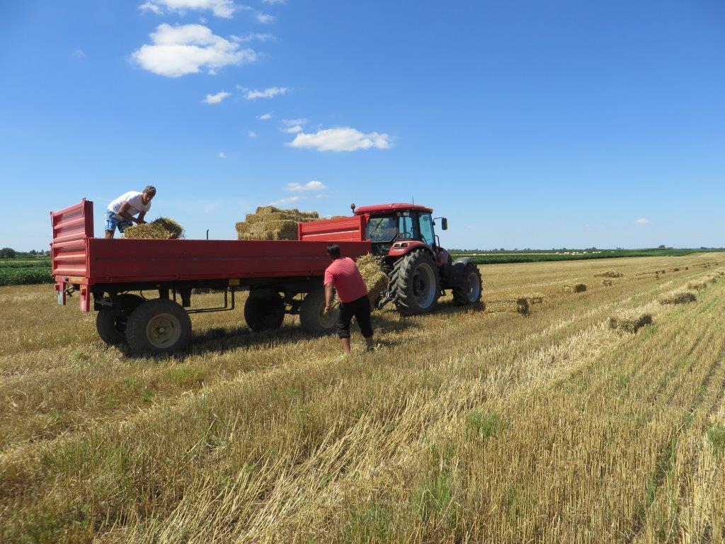 Ilustracija: poljoprivreda, foto: Domaćinska kuća