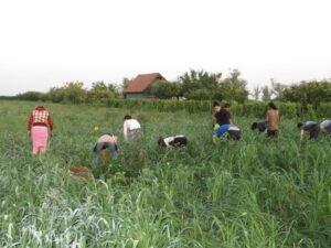 Ilustracija: sezonski radnici, foto: Domaćinska kuća