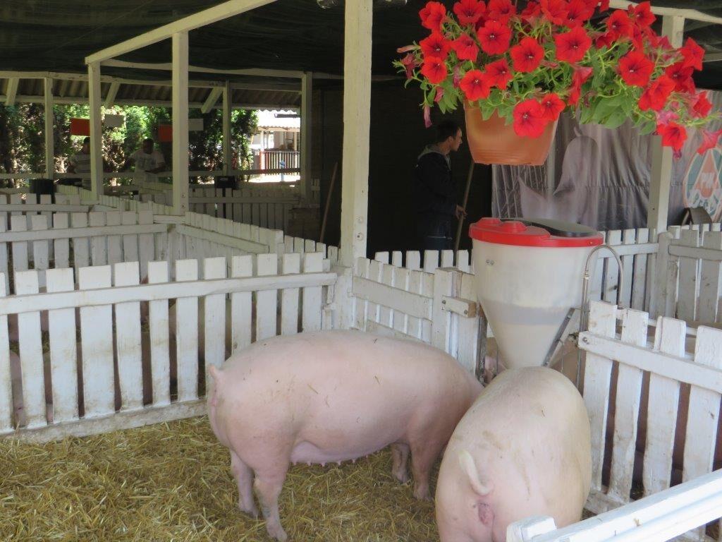 Ilustracija: sa Sajma poljoprivrede, foto: Domaćinska kuća