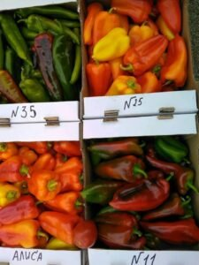 Ilustracija: paprika, foto: Superior