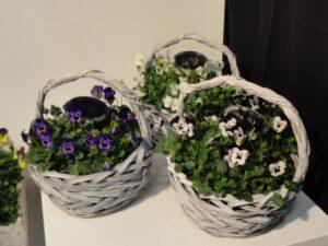 Ilustracija: cveće, foto: G,Đ.