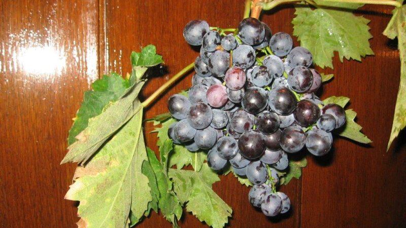 Čuvanjestonog grožđa