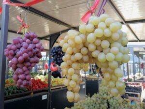 Ilustracija: belo i crno stono grožđe, foto: Svetlana Kovačević