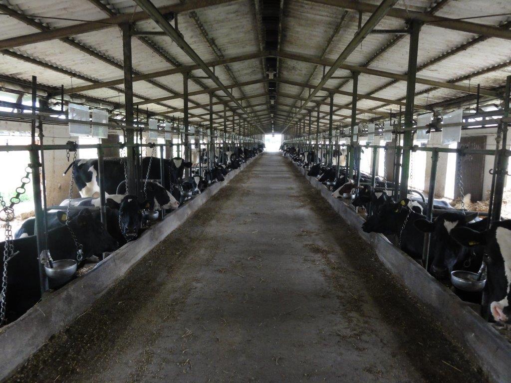 Ilustracija: farma krava PKB, foto: Svetlana Kovačević