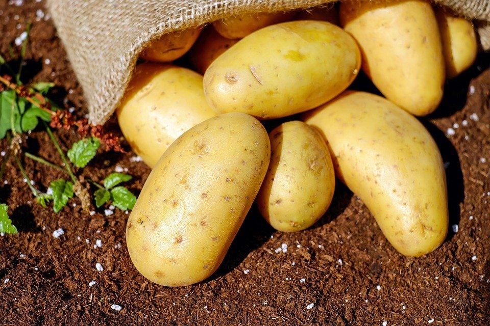 Ilustracija. krompir; foto: pixabay