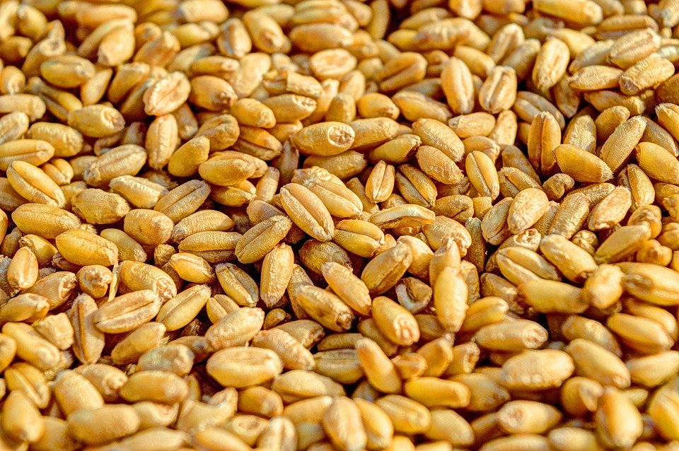 Ilustracija: organsko seme, fot: pixabay