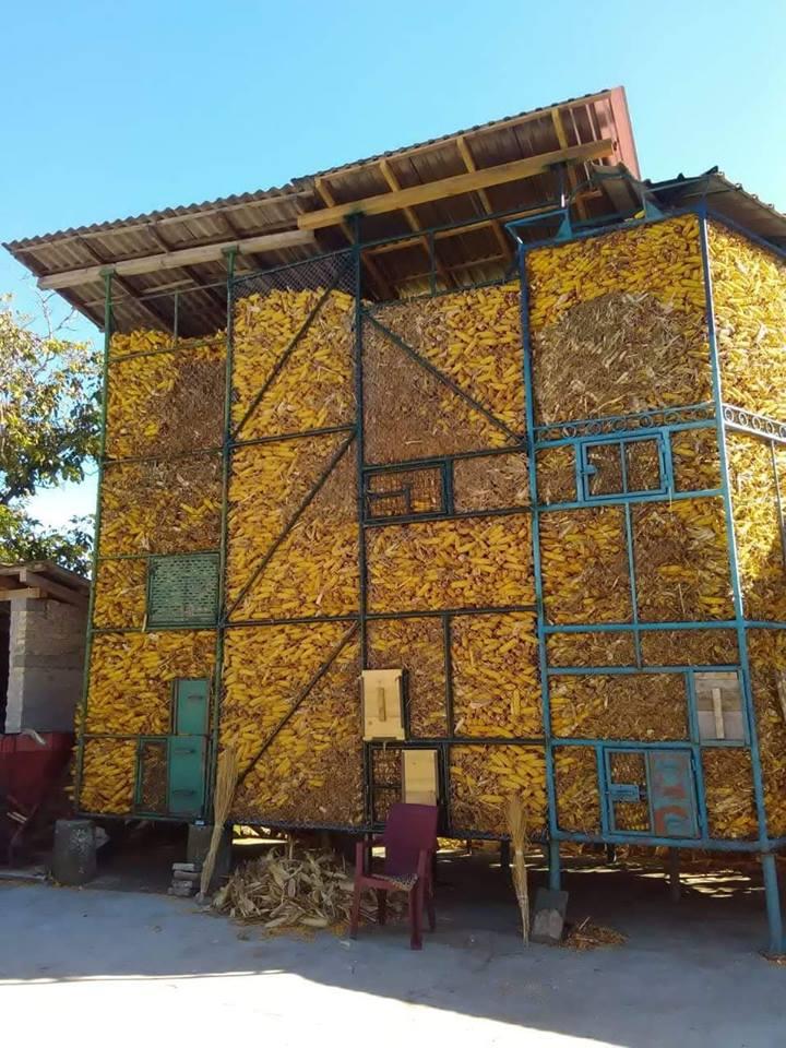 Ilustracija: Kojić dobro čuva kukuruz, foto: Domaćinska kuća