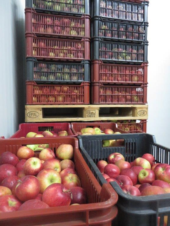 Ilustracija: čuvanje jabuke,foto: Domaćinska kuća