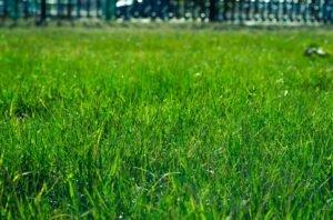 Ilustracija: travnjak, foto: pixabay