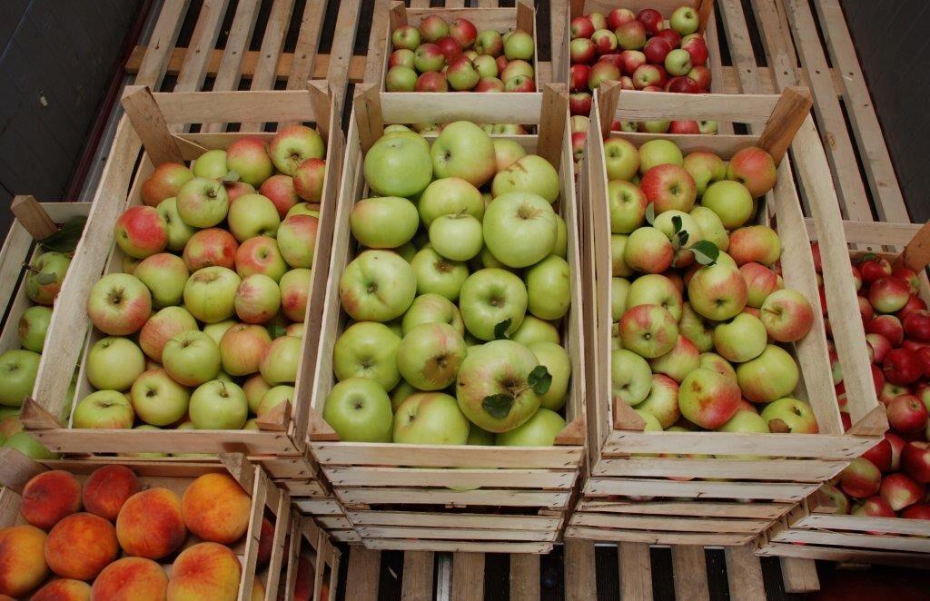 Ilustracija: jabuke u ambalaži, foto: Domaćinska kuća