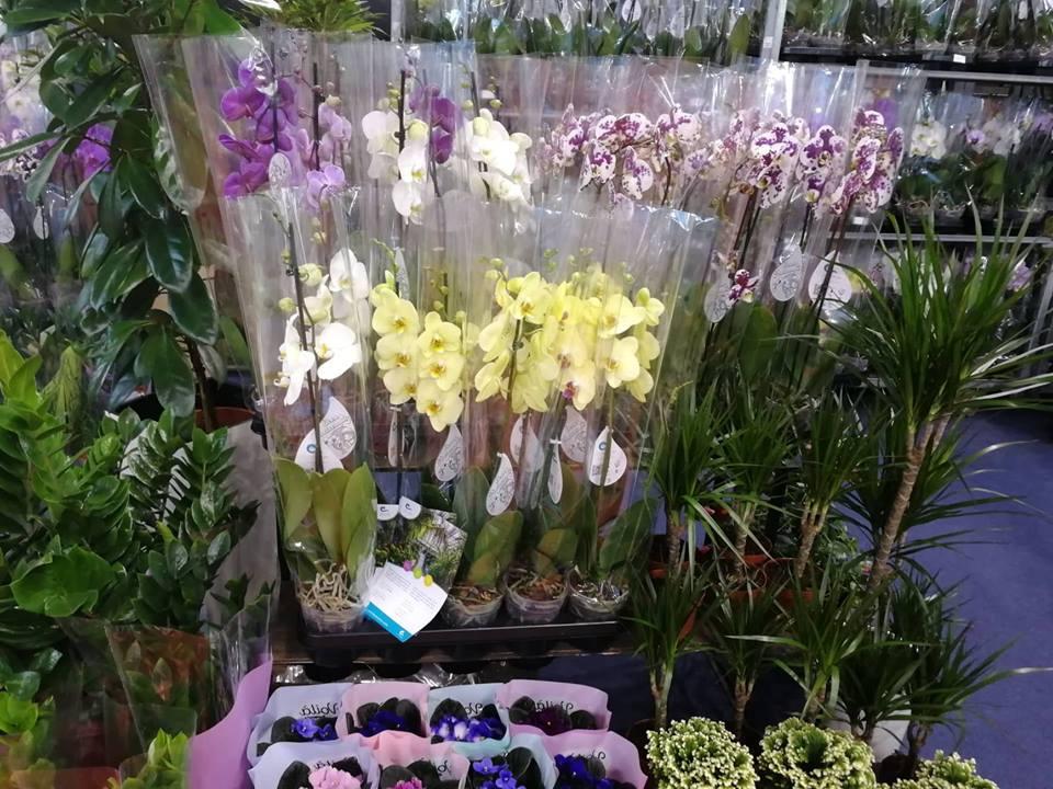 Ilustracija: orhideja, foto: Svetlana Kovačević