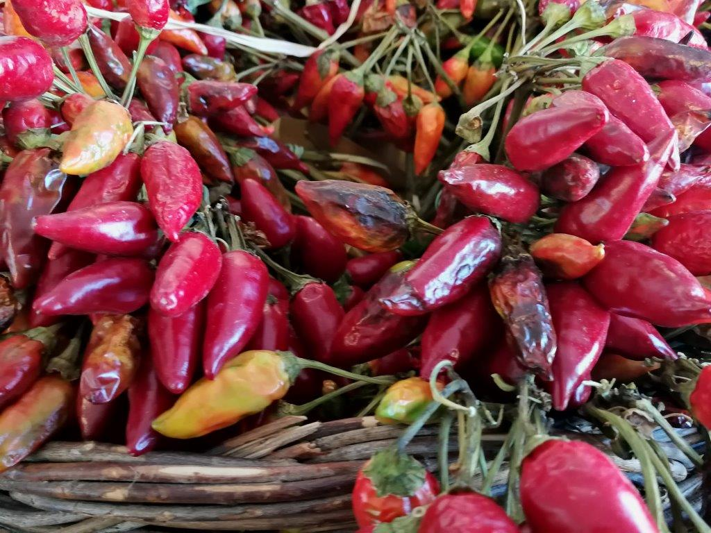 Ilustracija: povrće, Foto: Domaćinska kuća