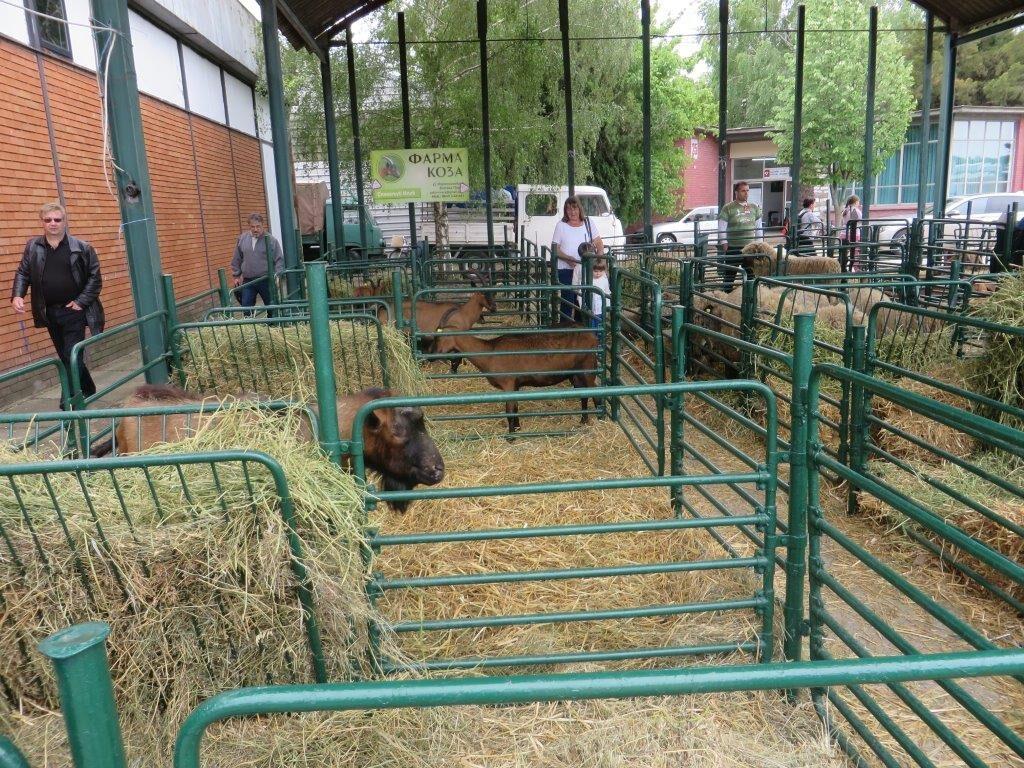 Ilustracija: Sa sajma poljoprivrede, foto: Svetlana Kovačević