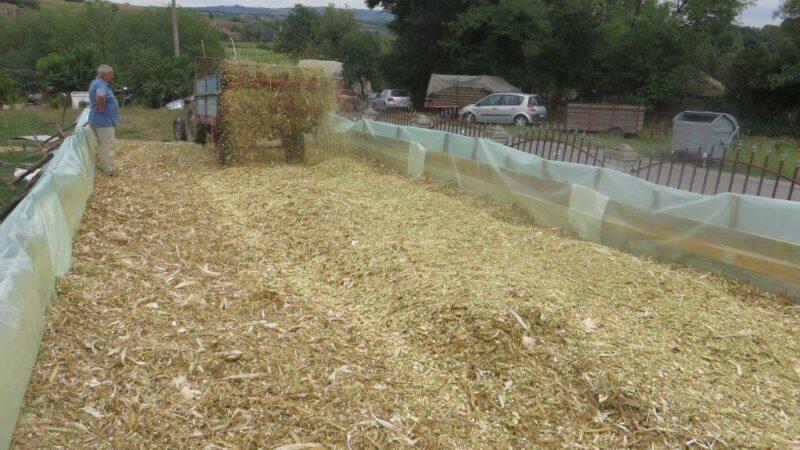 Ovo morate znati pre žetve silažnog kukuruza