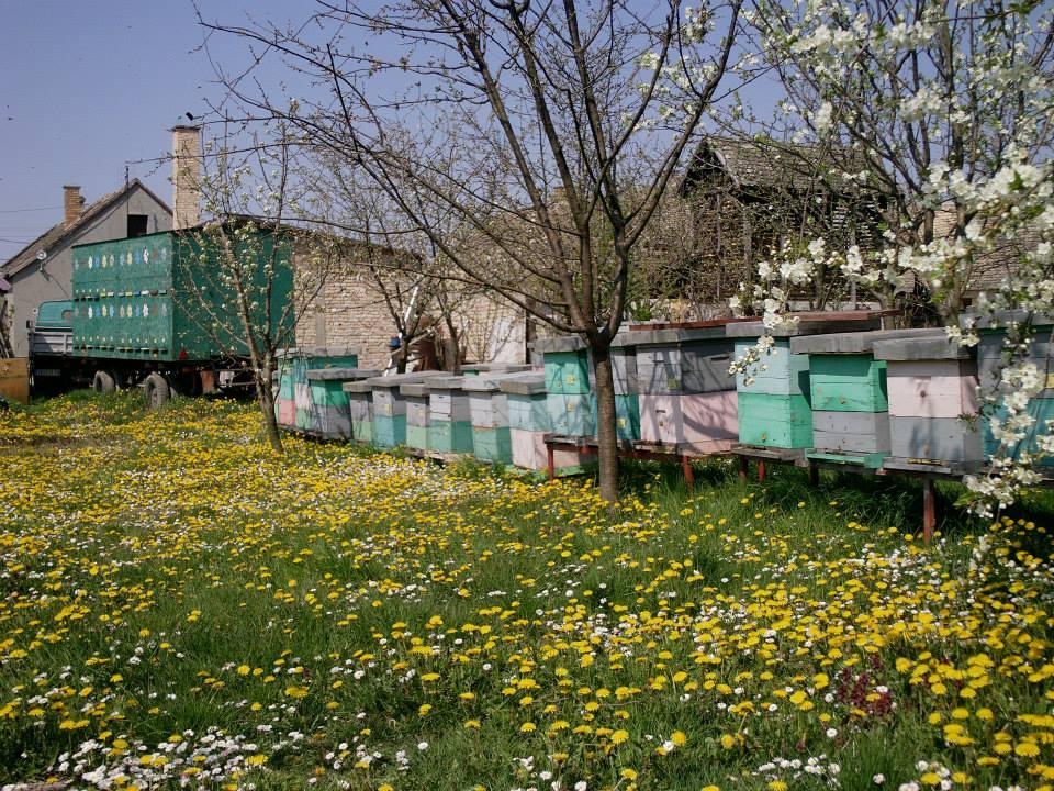 Ilustracija: pčelinjak, Foto: Tatjana Mrdak