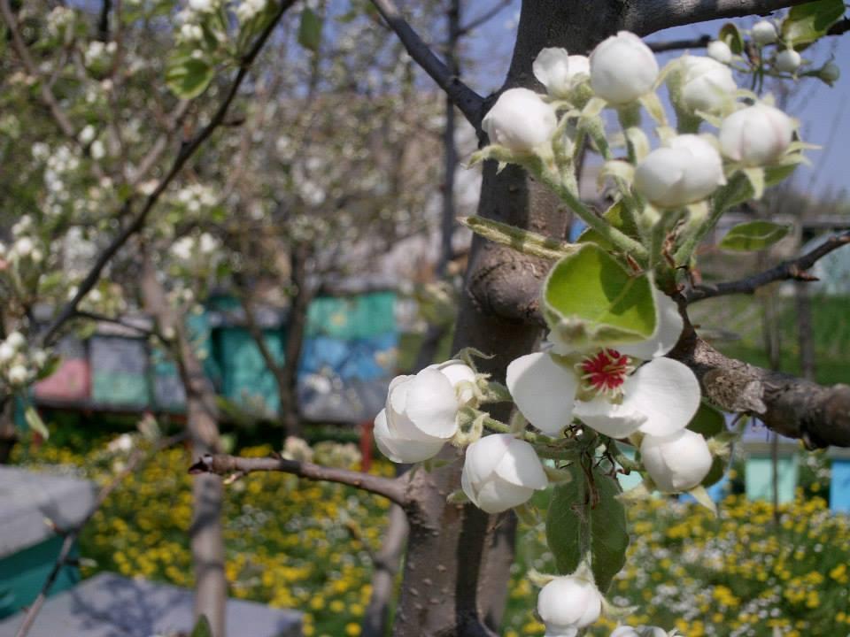 Ilustracija: pčela na cvetu, foto: Tatjana Mrdak
