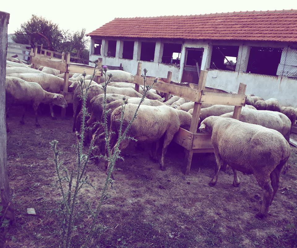 Ilustracija: ovčarstvo, foto: Svetlana Kovačević, Domaćinska kuća