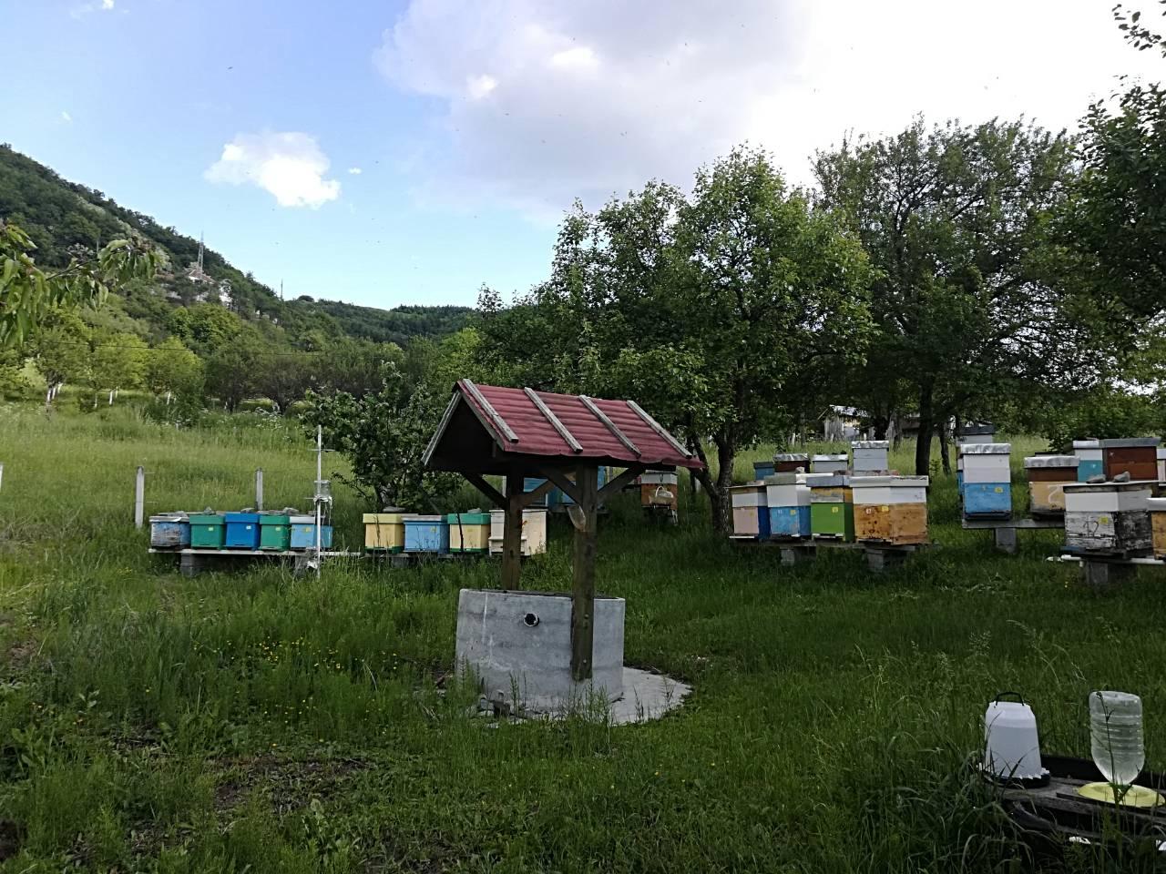 Ilustracija: pčelinjak, foto: Svetlana Kovačević, Domaćinska kuća