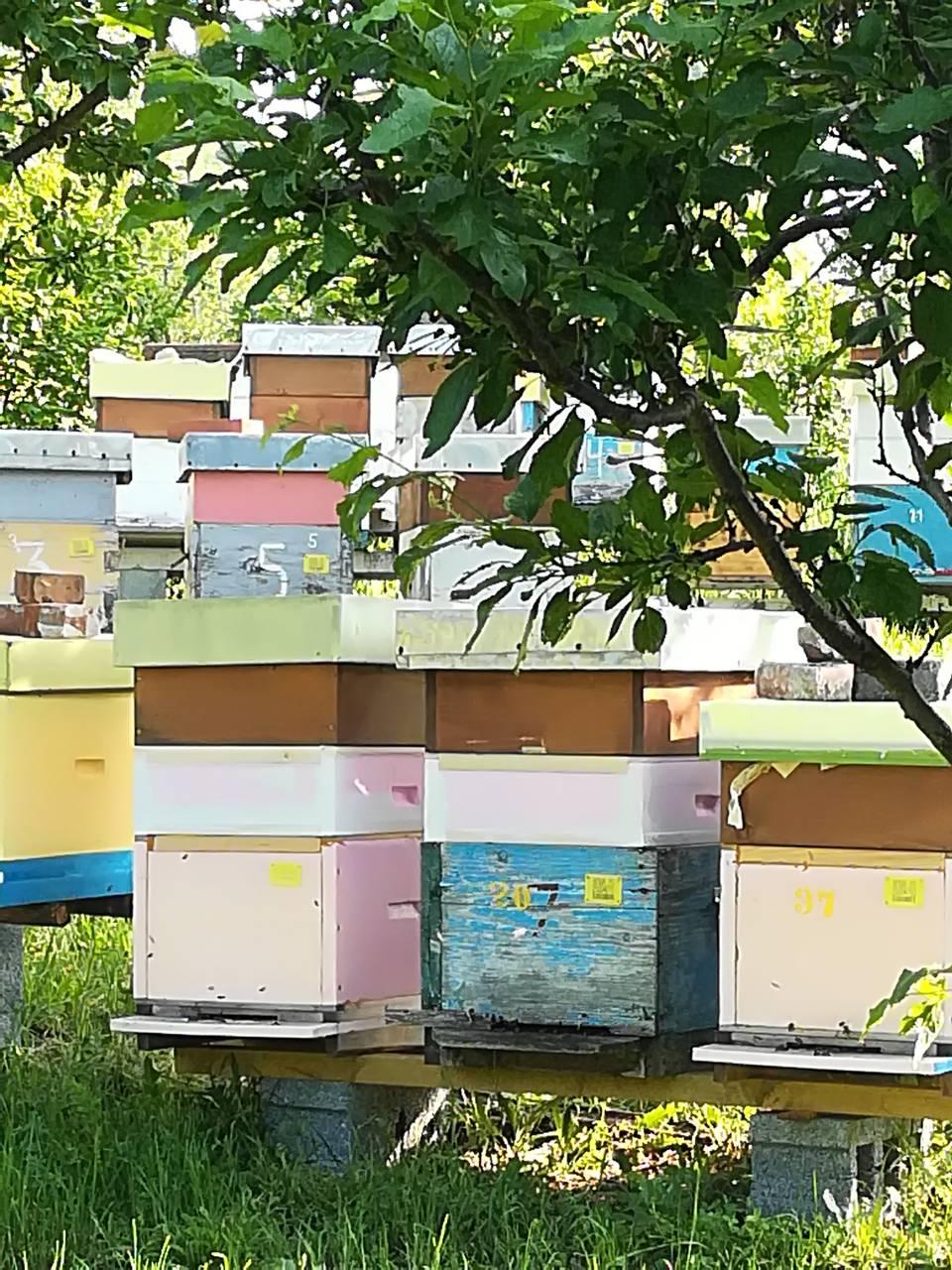 Ilustracije: pčelinjak, foto: Svetlana Kovačević, Domaćinska kuća