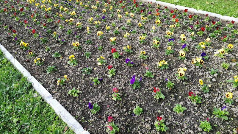 Koje cveće posaditi