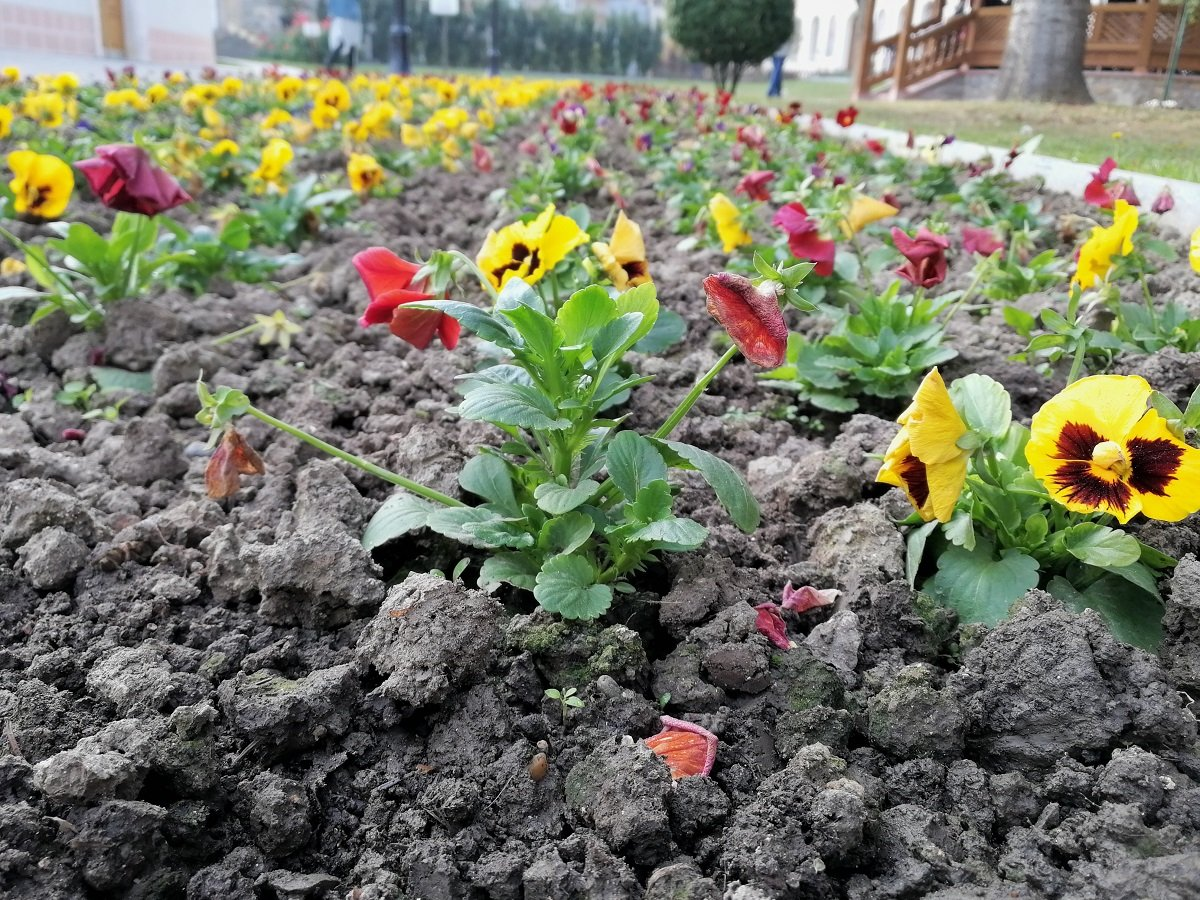 Ilustracija: cveće dan i noc, foto: Svetlana Kovačević, Domaćinska kuća