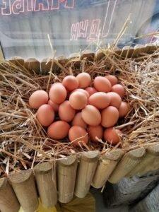 Ilustracija: organska jaja, foto: Svetlana Kovačević, Domaćinska kuća